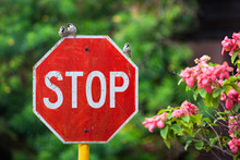 Close-Up Of Stop Sign Against Blurred Background