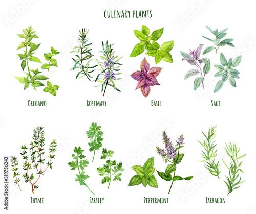Obraz Set of watercolor cooking herbs, mediterranean cuisine - fototapety do salonu