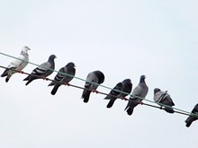 Low Angle View Of Pigeons Perching On Cable Against Clear Sky