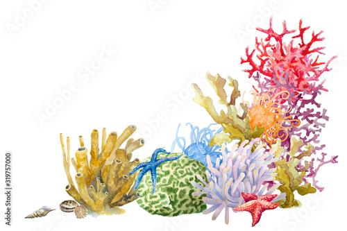 Carta da parati Reef with colorful corals , sponge, anemones, starfish