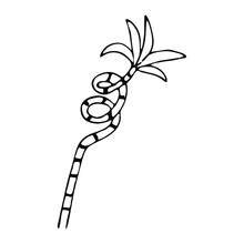 Hand Drawn Bamboo House Plant ...