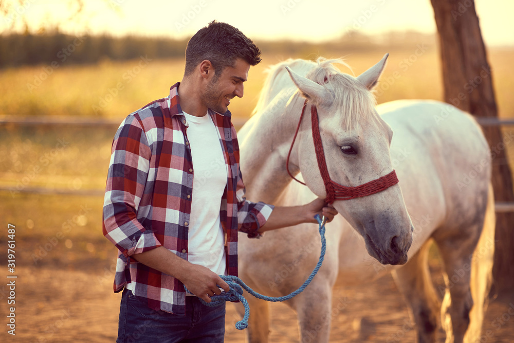 Fototapeta Handsome smiling man leading his white horse . Fun on countryside, sunset golden hour. Freedom nature concept.