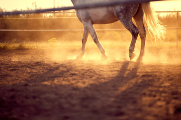 Horse galloping  on the ranch