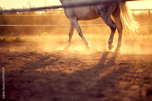 Fotomural Horse galloping  on the ranch