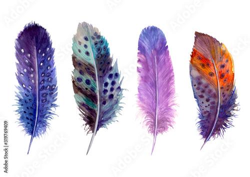 Hand drawn watercolour bird feathers vibrant boho style bright illustration Canvas Print