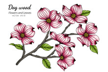Pink Dogwood Flower And Leaf D...