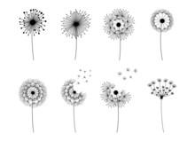 Dandelion Set. Doodle Hand Drawn Dandelions Monstera Isolated Vector Silhouettes, Summer Botanical Fluff Flower