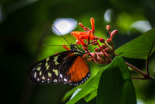 Close-Up Of Butterfly Pollinating On Buds