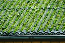 High Angle View Of Moss On Cor...