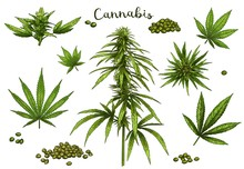 Color Hand Drawn Cannabis. Gre...