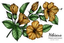 Orange Hibiscus Flower And Lea...