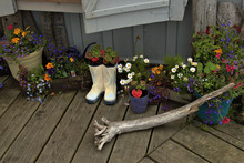Alaska Fllowers