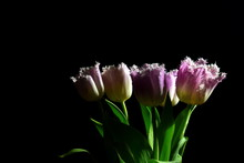 Pink Tulips. Romantic Flowers ...