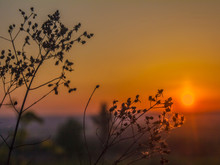 Silhouettes Of Stems Of Dry Plants At Sunrise And A Cloudless Sky