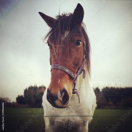 Fotografía CLOSE-UP OF HORSE IN FIELD