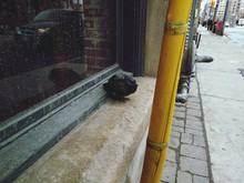 High Angle View Of Pigeon Perching On Window Sill