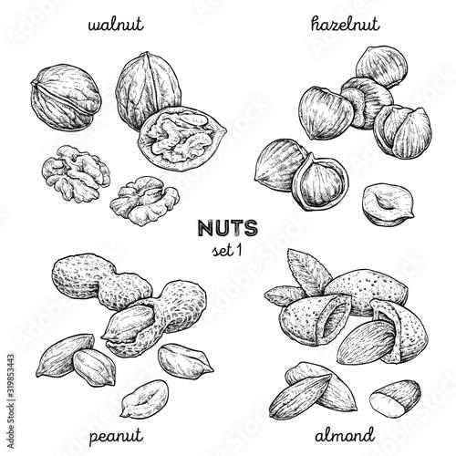 Obraz Walnut, peanut, hazelnut, almond. Hand drawn set with nuts. Vector illustration isolated on white background. Doodle healthy food illustrations - fototapety do salonu