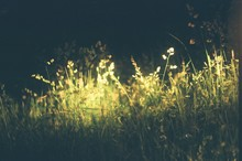 Illuminated Grass In Dark At Night