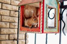 A Squirrel Sits In A Feeding T...