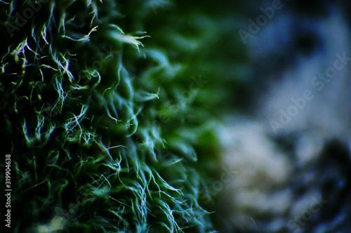 Obraz na plátně Close-Up Of Moss Growing Outdoors