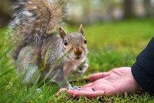 WOMAN Feeding Squirrel