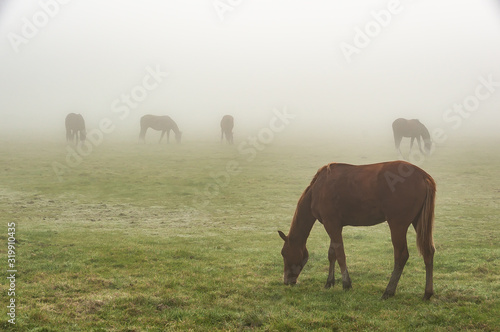 Photo HORSES GRAZING ON GRASSY FIELD