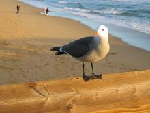 Seagull Perching Railing On Pier At Beach