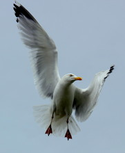 CLOSE-UP LOW ANGLE VIEW OF SEAGULL