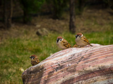 Sparrows On Rock Formation