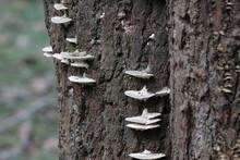 LIchens On The Tree Bark In Fall Season