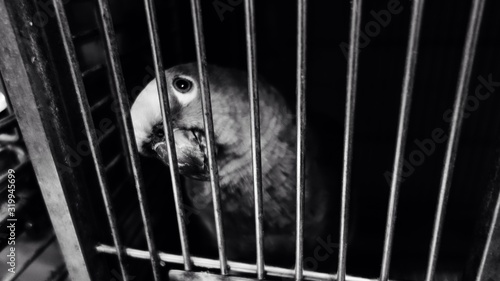 Fotografie, Tablou Close-Up Of Parrot In Cage