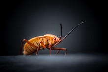 Close-Up Of Orange Bug Against Black Background