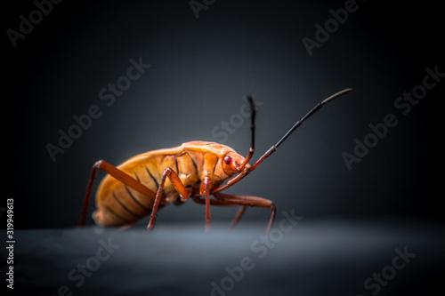 Canvas Close-Up Of Orange Bug Against Black Background