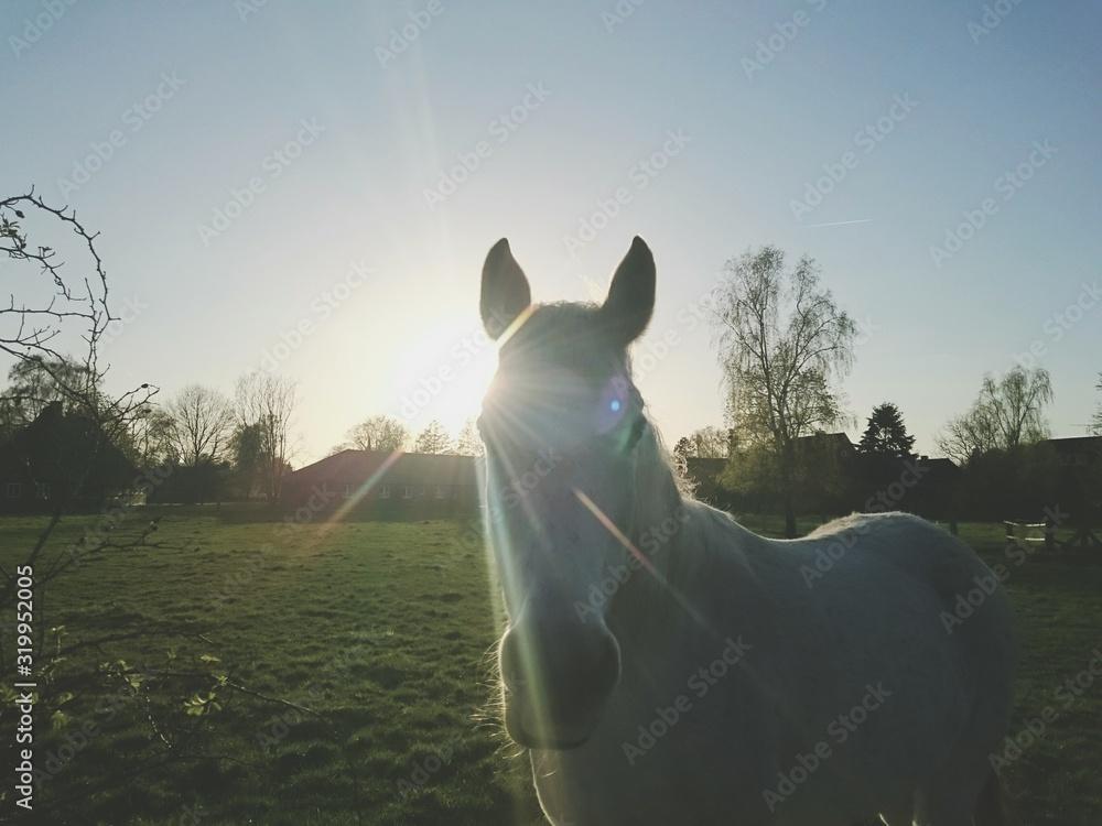 Fototapeta Portrait Of Horse Standing On Field Against Sky