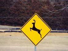 Close-Up Of Deer Crossing Sign On Field