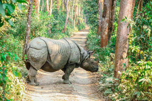 Obraz Rhino of Chitwan national park nepal - fototapety do salonu