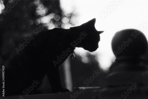 Silhouette Cat On Railing Tablou Canvas