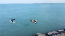 GOOSE FLYING OVER SEA