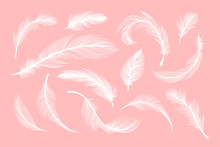 White Feathers, Vector Silhoue...