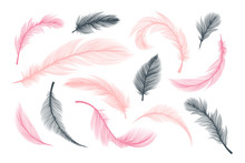 Feathers, Vector Pink And Black Fluffy Quill Plumes Isolated On White Background. Abstract Feathers With Realistic Plumage Texture Pattern, Wedding And Birthday Design Elements, Softness Concept