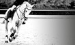 Horse and rider, black and white banner or header, billboard, duo tone. Beautiful white horse portrait during Equestrian sport show jumping competition, copy space for your text.