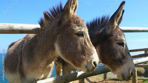 Stampa su Tela Donkeys At Shore Against Clear Sky