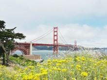Plants And Golden Gate Bridge Against Sky