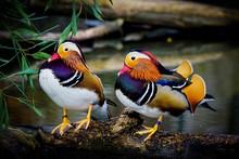 Birds Perching At Riverbank