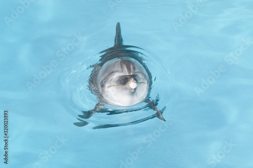 Photo view of nice bottle nose dolphin  swimming in blue crystal water
