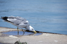 Close-Up Of Bird Drinking Water By Sea