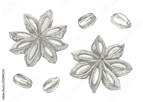 Star anise hand drawn illustration isolated on white background. Canvas Print