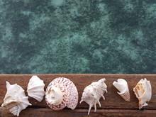 Directly Above Shot Of Seashells Over Sea