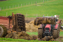 Tractor And Its Telescopic Fork Taking The Manure