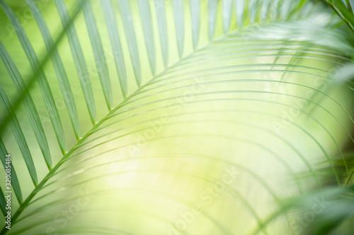 do-salonu-zielone-liscie-palmowe-w-ogrodzie